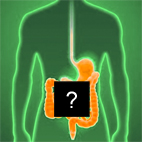 Digestive tract as a Black Box